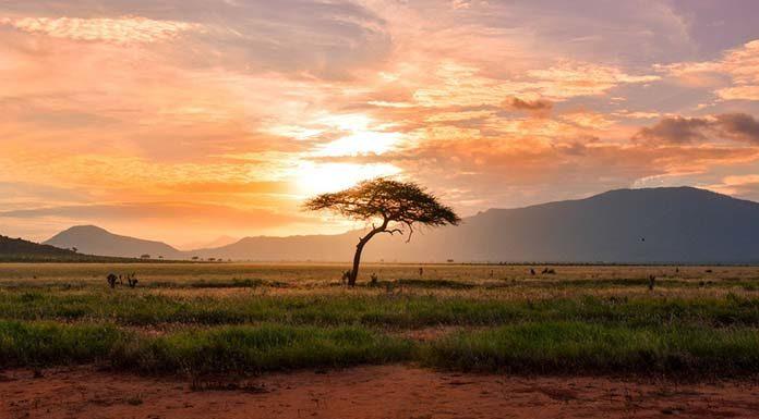 Na co zwrócić uwagę wyjeżdżając na wakacje do Afryki?
