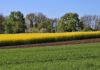 Środki ochrony roślin zapewniają bezpieczną żywność w niskich cenach
