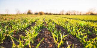 W jaki sposób współcześni rolnicy zabezpieczają się przed stratami w plonach